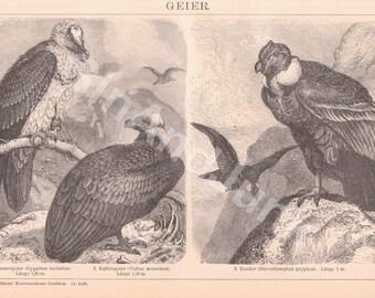 ANTIQUE VULTURE PRINT, Vulture Print, Vulture Plate, Vulture Picture, Vulture Lithograph, Vultures, Kitsch, Vintage Bird Print, Home Decor