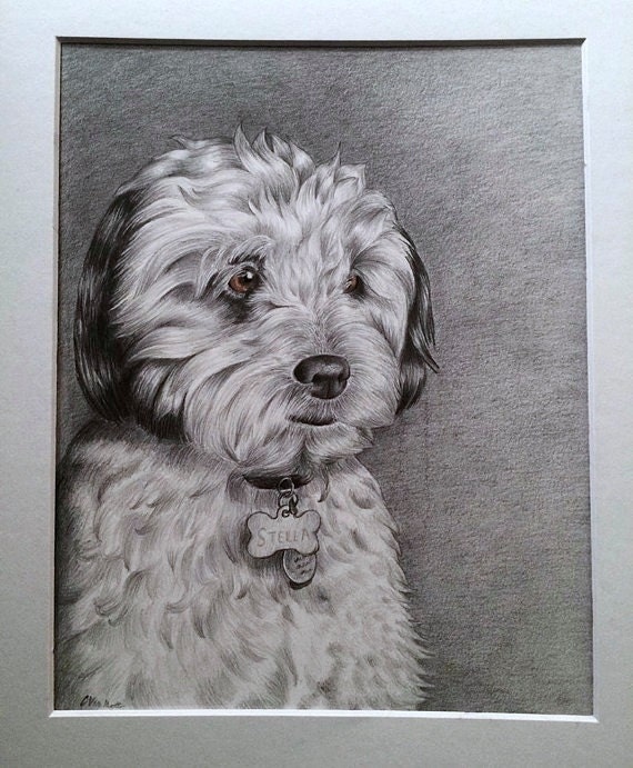 Custom Pet Portrait / Drawing - I will draw your beloved dog, cat, or favorite animal