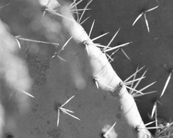 "8""x10"" Photograph of a Cactus"