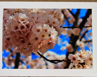 Cherry Blossoms Photo Greeting Card,  Spring Flowers, Blank Inside, All Occasion