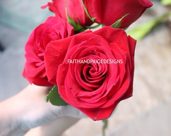 Rose picture, nature photography, flower photography, floral photograph, flower picture, rose photography, digital download, rose photograph