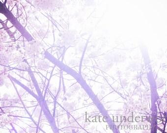 Nursery Decor, Nature Photograpy, Spring Photography, Fine Art Photography, Home Decor