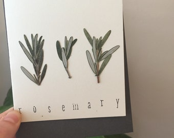 Herb Collection- Rosemary Botanical Note Cards- Herb Stationary- Blank Nature NoteCards- Thinking of You Gift- Gift Note Cards - Gift Cards