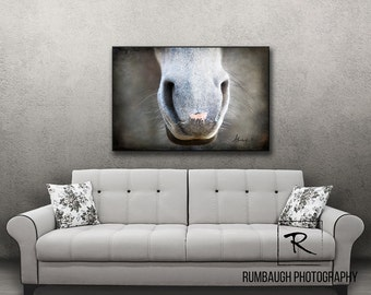 Horse Art Canvas-Horse muzzle