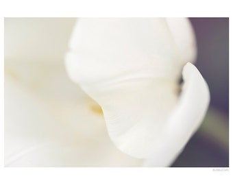 Nature Photography PRINT, White Tulip Details - 3, Wall Art