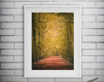 Forest Art, Fall Decor, Nature Print, Forest Print, Tree Art, Forest Photography, Woodland Art Print, Printable Art, Digital Download