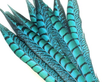 11-13 Inch Turquoise Blue Lady Amherst Feathers. (5) Long Lady Amherst Pheasant Feathers. Blue Bird Feathers. Blue Feathers. Black Stripe