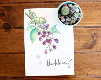 Blackberries Print