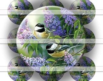Digital Bottle Cap Collage Sheet - Chickadees - 1 Inch Circles Digital Images for Bottlecaps
