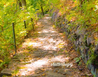 Pathway Print, PHOTOGRAPHY, LANDSCAPE, WALL art, trees, nature, wood, picture, art