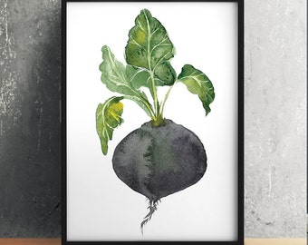 Kitchen poster Black radish print Vegetable art Watercolor print ACW314
