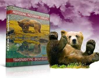 12 Bears Transparent PNG Animal Overlays, Photo Overlays, Photoshop Overlay, Photography Backgrounds, Digital Background, Digital Backdrop