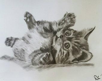 Original charcoal fluffy kitten