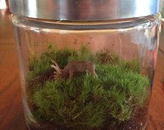 Moss Terrarium Grazing buck
