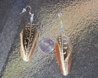 Ringneck Pheasant Feather Earrings