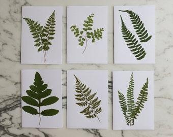 Woodland Ferns - Set of 6 pressed flower cards with envelopes