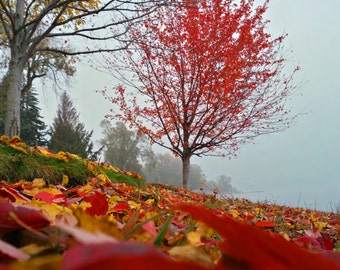 Autumn Leaves Fall Foliage Trees in the Misty Fog Art Photography Poster by RCMphotos