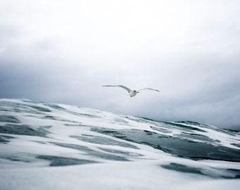 Seagull Flyby - Ocean Photo Fine Art Hahnemühle Print - art prints, home decor, wall art, wall decor, digital prints.