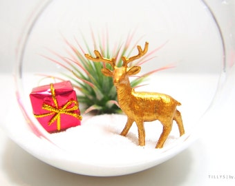 Christmas Reindeer (Metallic Gold) Air Plant/Tillandsia Terrarium Kit Decor