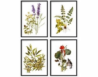 Botanical Print Set - Botanical Wild Flowers Print set - Art Print - Antique Botanical Prints - Posters - Wild Flowers - Wall Art