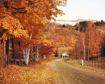 Fall Foliage, Autumn Colors,  Sugar House, New England, Vermont Travel Photo, Reading Vermont, Birch Trees, Red And Orange Colors, Wall Art