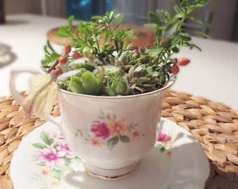 Deco cup and succulents