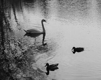Photography, Black and White, Nature, Animals