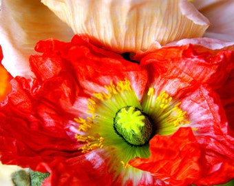 POPPIES FLOWER, Art Print, Flower Print, Photography Print, Artist Signed Print