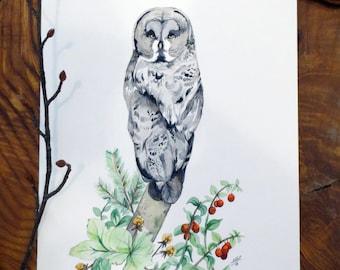 Original Watercolour - Chouette Lapone