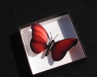 Painted copper butterfly