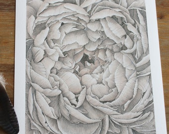 Elegant Peony Print. Ink and pencil drawing by Aimee Nesbitt.
