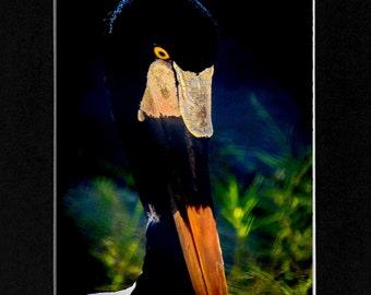 Photography Bird