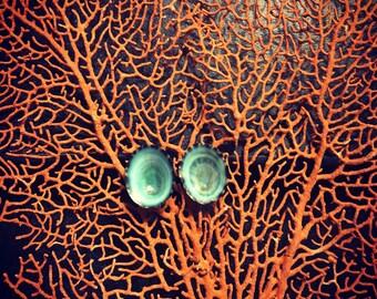 Green limpet earrings, seashell earrings, beach jewelry, nautical, beach, handmade, hippie, mermaid
