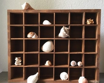 Shell Collection, Rustic Home Decor, Beach Decor, Natural History, Curiosity Cabinet, Nautical