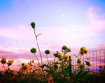 Flowers and sunset