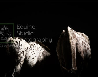 Appaloosa Abstract 4, Fine Art Print, Equine Photography