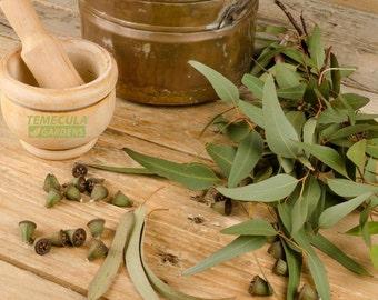 Fresh Eucalyptus USA  Wild Organic 400 Leaves