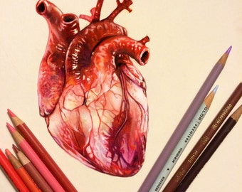 Colored Pencil Heart Drawing