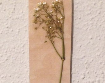 Pressed Baby's Breath on Wood 4