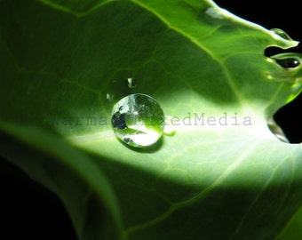 Droplet Photograph Wall Art