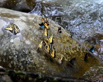 Piles of Butterflies