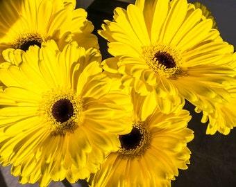 Amazing yellow flowers