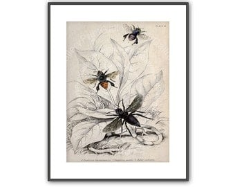 Natural History Bee Print Entomology Honey Bee Apis Beekeeper Antique Hand Colored Bee Engraving Apiarist Nature Study Wall Art Decor ar 199
