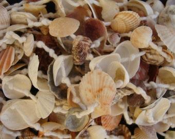 Shell jewelry mediterranee-italian sea shells jewelry-bracelets anklets bracelets woman-child-