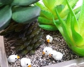 5 Terrarium Tiny Duck  Miniature Dollhouse Fairy Garden  /Set
