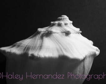 Black and White Shell Photo