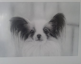 papillon dog framed print from my drawing,gift ideas animals, dogs,pappillon,