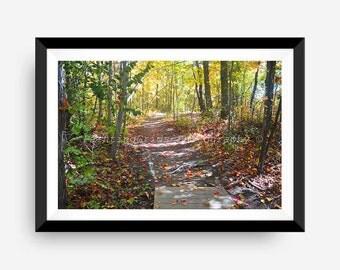 Nature Trail Photograph - Autumn - Instant Digital Download