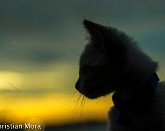 Kitten Sunset