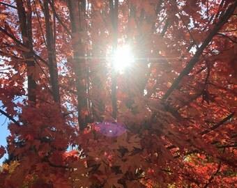 Fall Day in Boise